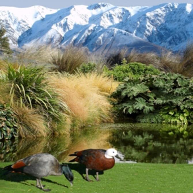 Middle Rock garden scene